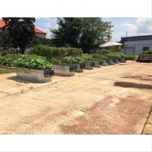 Sections of the garden that are handicap accessible for volunteers in walkers or wheelchairs to have access.