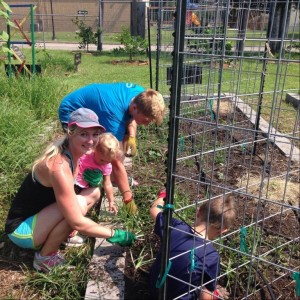 Weeding, transplanting plants, and laying straw in the garden beds.