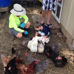 """They were having a problem with a """"bully"""" chicken pecking the feathers off the other chickens while they were laying their eggs.  Sharon told us that they were able to relate this to the elementary school students in a really good lesson about bullying."""